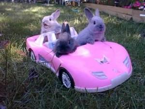 Bunnies Driving